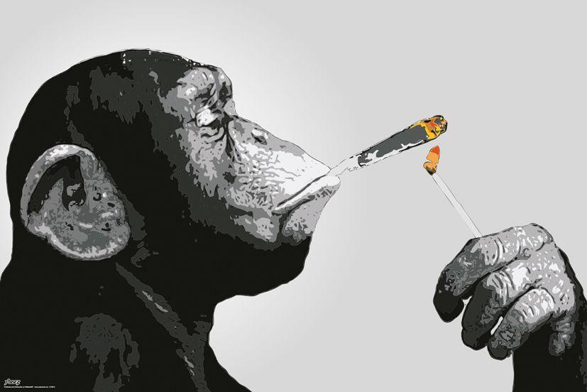 gn0813-steez-malpa-i-papieros-plakat.jpg